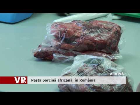 Pesta porcină africană, în România