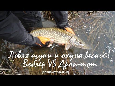 ловля окуня в спиннинг бесплатное видео
