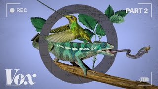 Download Youtube: How wildlife films warp time