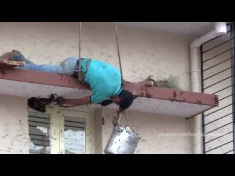 Urban Honey Hunting – Harvesting honey of wild Giant Honey bees – Apis dorsata – in Bangalore