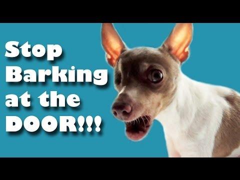 Wonderful Ideas For Breeding Your Dog