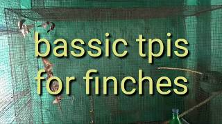 Finches ki care kaise kare bassic tips for beginners