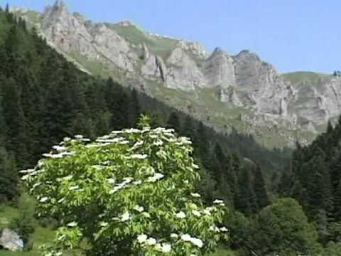 Welcome to Sharr mountain-Pearl of Europe