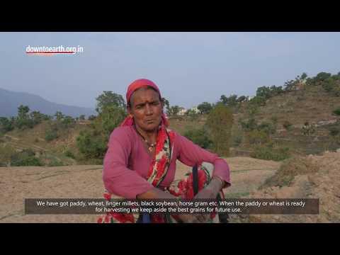 Why farmers in Uttarakhand prefer indigenous seeds over hybrids