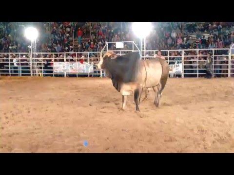 Montarias Rodeio de Bofete 2008