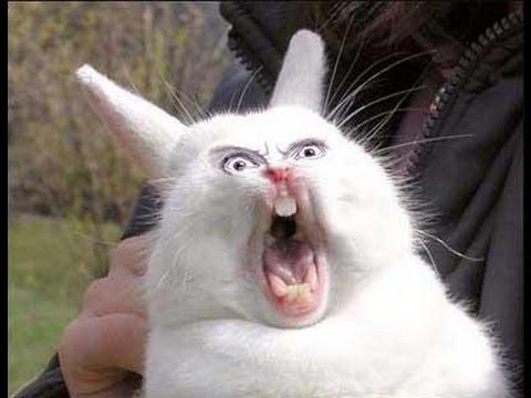 nervous rabbit funny video нервный кролик