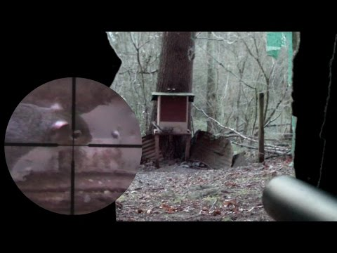 Pest Control with Air Rifles – Scope Cam Squirrel Shooting – An Element of Luck