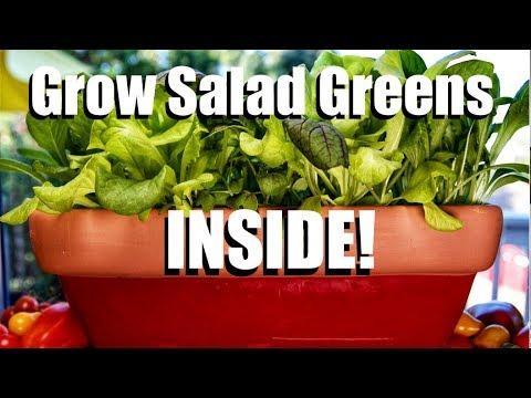 How to Grow Salad Greens INSIDE! // Indoor Garden Series #2 (видео)