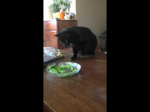 Kitty Thinks Peas Are Making Music