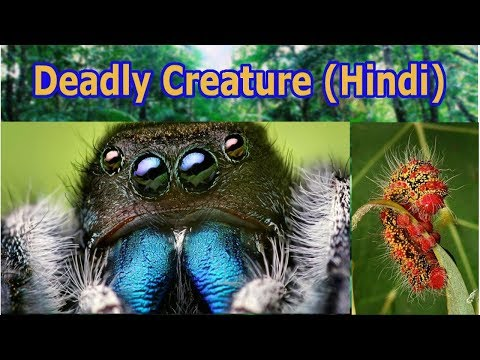 5 Deadliest Insects On Earth   Hindi