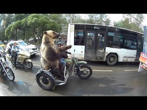 العرب اليوم - شاهد: دب يركب دراجة نارية ويسلي السائقين على الطريق