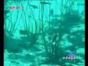 世上最大蟒蛇捕殺鱷魚