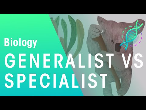Generalisten vs Spezialisten