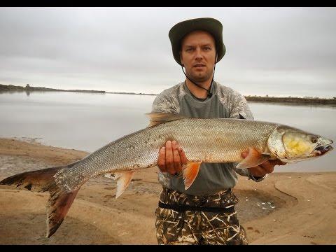 рыбалка на желтощека видео