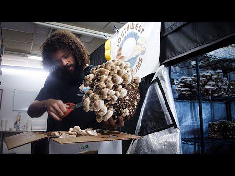 Shiitake Mushroom Harvest and Cultivation Tips | Southwest Mushrooms
