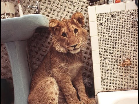 Image of Christian the lion video clip
