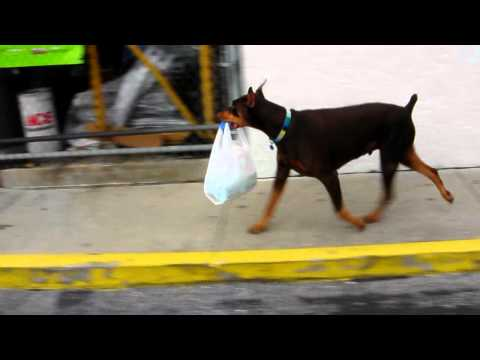 doberman attacks shopping plaza