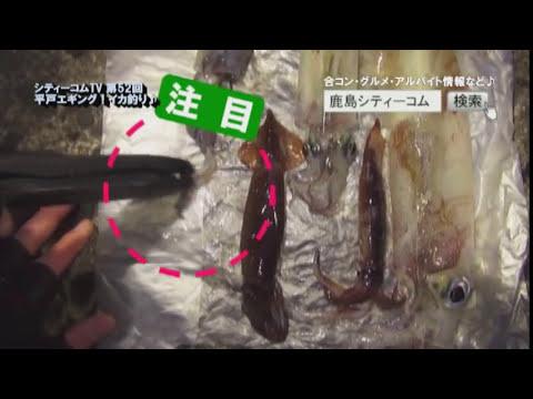 平戸エギング!シティーコムTV第52回