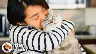 Meet The Most Popular Cat On Instagram    The Dodo Airbnb Experiences by The Dodo