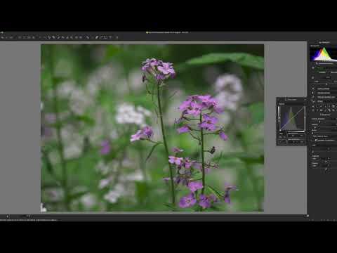 Silkypix 9: Hidden Features