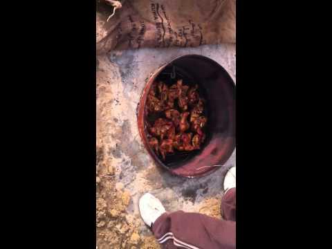 مندي دجاج مخيم بو فيصل اللوغاني ٢٤-٢-٢٠١١