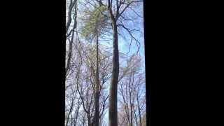 Video Using my Big Shot to get throwline in tree for T5 Geocache MP3, 3GP, MP4, WEBM, AVI, FLV Desember 2017