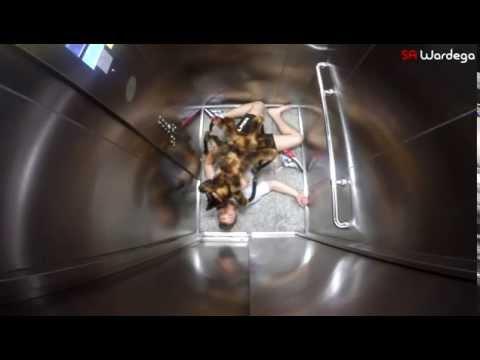 Ce chien déguisé en araignée mutante effraie les passants. Une caméra cachée terrifiante !