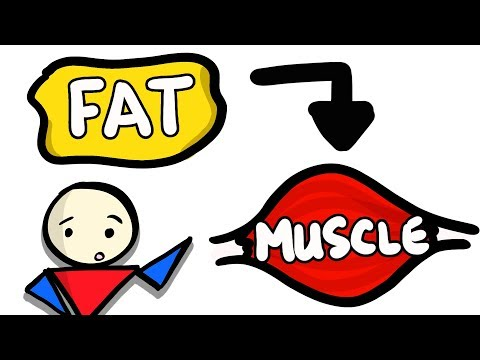 Can You Turn Fat Into Muscle?