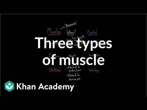 Three types of muscle  Circulatory system physiology  NCLEX-RN  Khan Academy