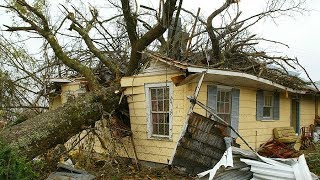 Video 7 EXTREME Dangerous Tree Fails Compilation 2019 ¦¦ Tree Removal Fail ¦¦ Tree Falling in House MP3, 3GP, MP4, WEBM, AVI, FLV Juni 2019