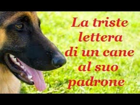 no all'abbandono - un cane racconta la sua commuovente storia