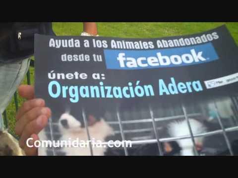 Se manifiestan contra la venta de animales en San Miguel