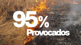 2 - Incendios Forestales, Otra Vez.-