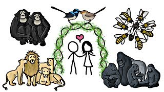 Are any Animals Truly Monogamous? - YouTube