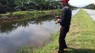 Download Video Tu dia rod patah tiga ikan aneh 50kg MP3 3GP MP4