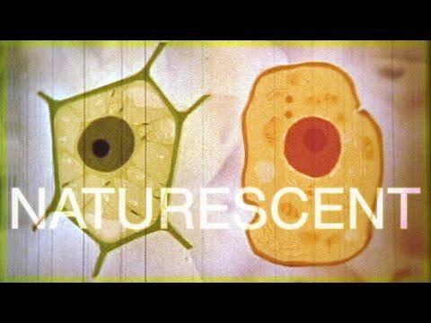 TRS-80 • Naturescent