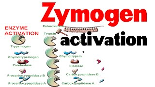 Zymogen activation