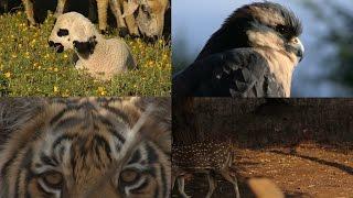 United Nations - La biodiversidad es la variedad de seres vivos en el mundo. Sin biodiversidad no tenemos agricultura, bosques...