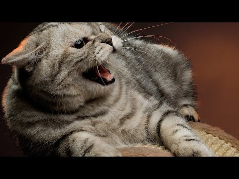 How to Deal with an Aggressive Cat | Cat Care