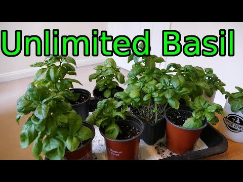 How to Grow More Basil Than You Can Use in No Time