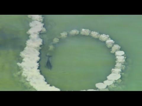 這幾隻海豚不斷用尾巴拍打河床,直到河裡掀起濃濃的海沙後才發現牠們太聰明了!