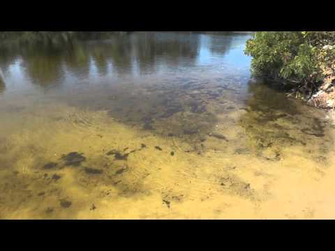 кировское днепропетровск рыбалка