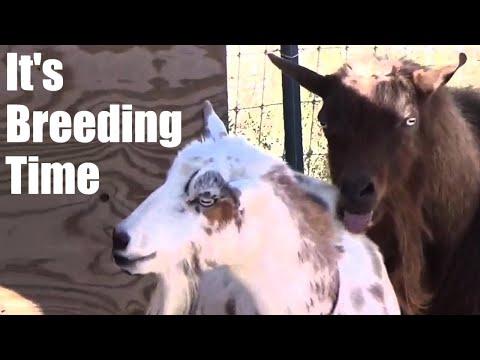 It's Breeding Time!!