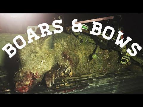 Bowhunting Big Texas Hogs