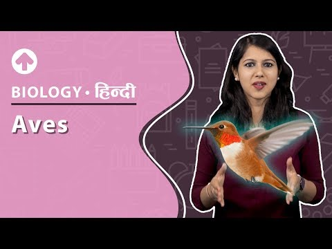 Aves | Hindi | Diversity In Living Organisms | Biology | Class 9