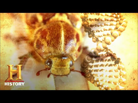 Ancient Aliens: Insectoid Humans Travel Through Time (Season 7) | History