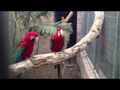 鸚鵡竟然跳起了嘻哈舞,還照著節奏超可愛!