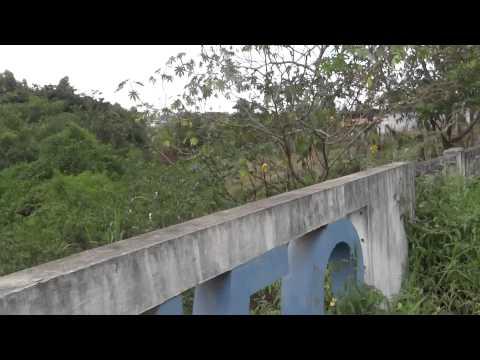 Saae de Formiga comete crime ambiental