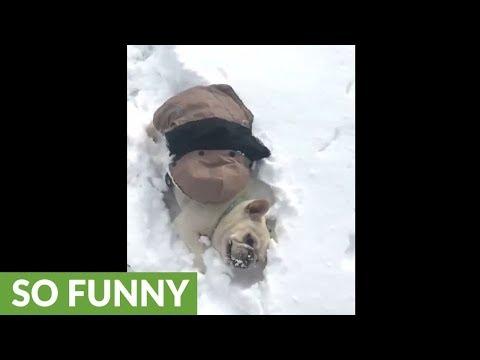 il-french-bulldog-nella-neve