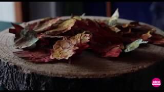 L'autunno e i suoi colori…